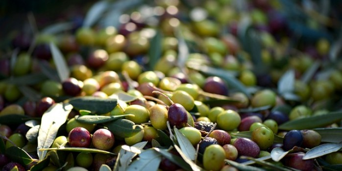 Extra Virgin Olive Oil in the Tuscan culture :: Bike Florence and Tuscany