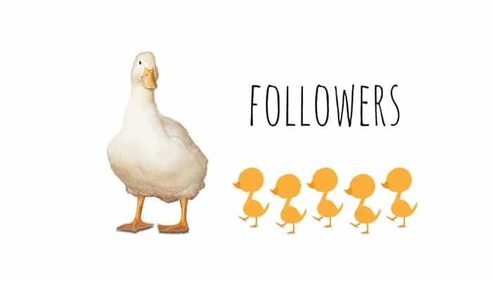 FOLLOWERS SUI SOCIAL NETWORKS